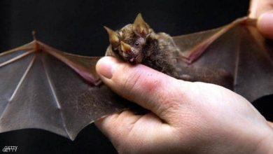 Photo of السر الخطير.. لماذا يتهم الخفاش بنشر فيروسات العالم القاتلة؟